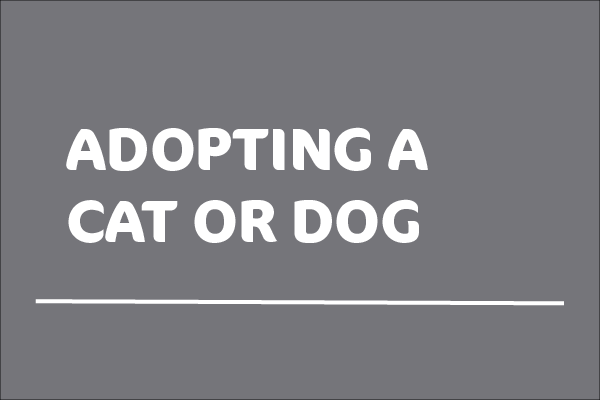 White text stating Adopting a cat or dog on a grey background