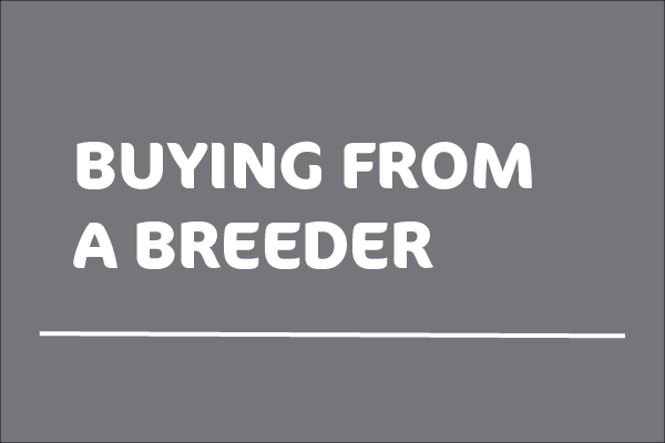 White text stating 'Buying from a breeder' on a grey background